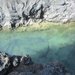 Las Tintoreras e os tubarões galha-branca oceânicos